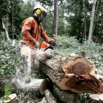 Удаление деревьев и расчистка участка в Жуковском, в Жуковском