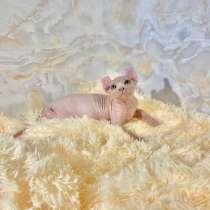 Sphinx Kittens, в г.Ampezzo