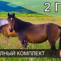 Электропастух для лошадей, в Чебоксарах
