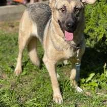 Статная Лайка - красивая собака с отличным характером ищет д, в Москве