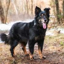Чудесный пёс Круз в добрые руки, в Москве