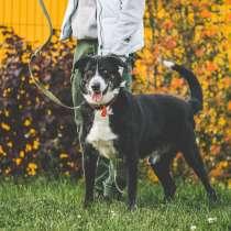 Одинокий приютский пес Пушок хочет найти хозяев!, в Подольске