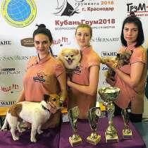 Профессиональная стрижка собак и кошек в Новороссийске, в Новороссийске