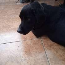 Отдам в добрые руки! Пёс, 2 года, ласковый, беспородный, в г.Сухум