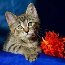 Ищут дом замечательные котята Альфа и Мышка, в Москве