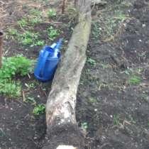Яблоня на дрова, в Тамбове