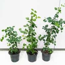 Комнатные растения, в Екатеринбурге