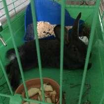 Кролик, в Самаре