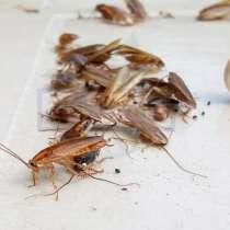 Уничтожение клопов и тараканов, в Екатеринбурге