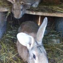 Кролики, цыплята, в Находке