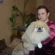Приму роды у собак и кошек любой породы, в Новосибирске