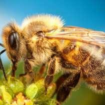 Продам пчел, в Перми