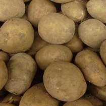 Отдам картошку, в Димитровграде