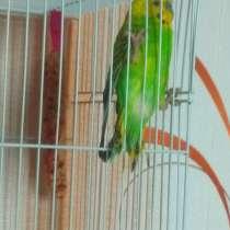 Отдам попугая, в г.Жлобин