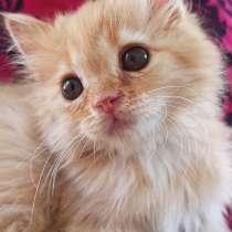 Породистый котёнок ?? срочно, в Каспийске