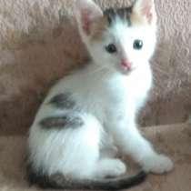 Прелестный котёночек (мальчик) ищет заботливую семью, в Ростове-на-Дону