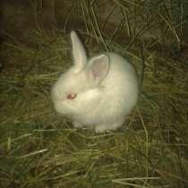 Кролики, в г.Харцызск
