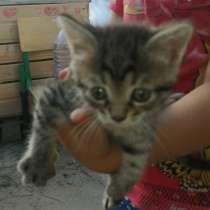 Котята в добрые руки(10.06.20) в зеленограде, в Москве