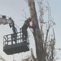 Удаление деревьев, измельчение веток, в Краснодаре