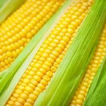 Семена кукурузы краснодар, в Краснодаре