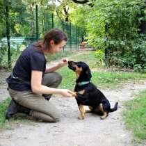 Коррекция поведения и дрессировка собак, в Москве