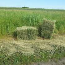 Качественное сено для всех видов животных, в Оренбурге