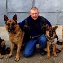 Дрессировка собак, в Феодосии