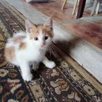 Отдам котят, в Новороссийске