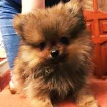 В связи с переездом отдаю щенка, в Нижнем Новгороде