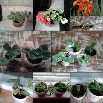 Комнатные растения, в г.Минск