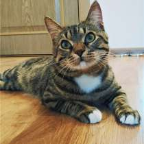 Супер-кот ищет дом!, в Москве