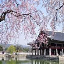 Переводчик в Сеуле, переводчик в Корее, в г.Сеул