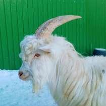 Продам козла, в Ульяновске