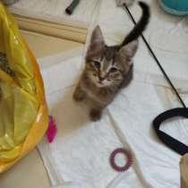 Отдам котенка в добрые руки, в Москве