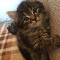 Котята в добрые руки, в Бронницах