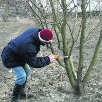 Профессиональная обрезка деревьев, кустарников и винограда, в г.Харьков