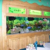 Обслуживание аквариумов в Донецке, в г.Донецк