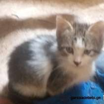 Подарю котенка, в г.Тбилиси