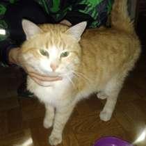 Кот Семён ищет нового хозяина, в Тамбове