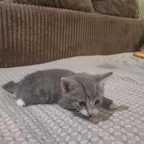 Отдам котенка(мальчик), в Чите