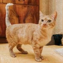 Рыжая кошечка Фокси в поисках дома, в Москве