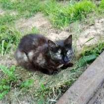 Кошечка ищет Дом, в Твери