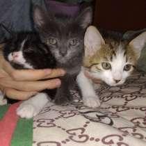 Месячные котята, в г.Ташкент