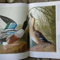 Джеймс Одюбон: Птицы Америки (в футляре), в Санкт-Петербурге