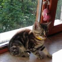 Котята в добрые руки, в Чапаевске