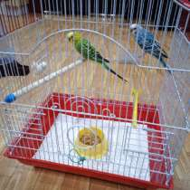 В дар попугайчиков, в Москве