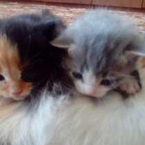 Маленькие котята, в Усть-Илимске