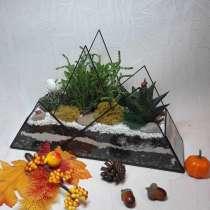 Флорариум с живыми суккулентами, в Зеленограде