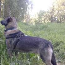 Лютик - очень умный пес ищет постоянный дом!, в Москве