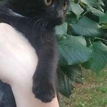 Отдам котёнка Яхоко в добрые руки ?, в г.Кишинёв